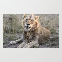 Male African Lion Rug