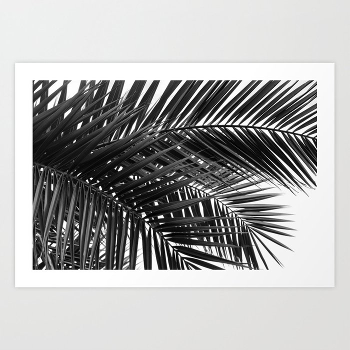 Tropical Palm Leaves - Black and White Nature Photography Kunstdrucke