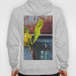 yellow euphorbia milii plant with old lusty metal background Hoody
