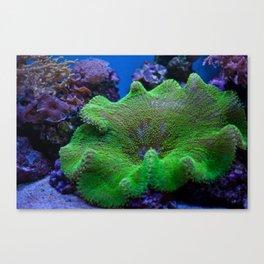 Underwater Coral Reef Canvas Print