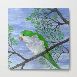 A painting of a quaker parrot Metal Print