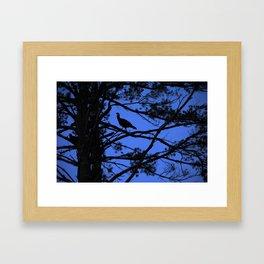 turkey roosting Framed Art Print