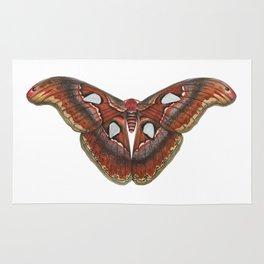 Atlas Moth Rug