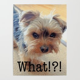 Yorkie   Dogs   Terrier   Pets   Humor   What!?! (with text) Poster
