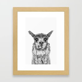 Llama BW Framed Art Print