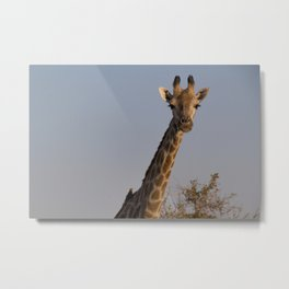 Giraffe and Oxpecker Metal Print
