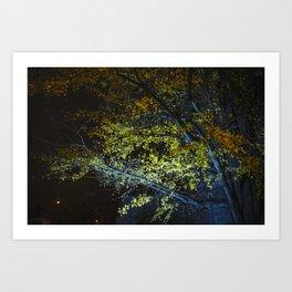 Autumn Tree at Night Art Print