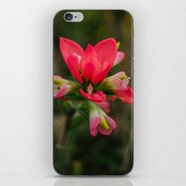 Indian Paintbrush iPhone Skin