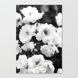 Wild French Roses Canvas Print