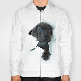 Neapolitan Mastiff black dog  Tearing Through Hoody