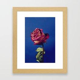 Rose I Framed Art Print
