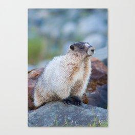 The Marmot Canvas Print