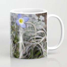 May Bluets Coffee Mug