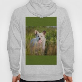 Single white stray tyke dog at the meadow Hoody