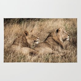 Camouflaged African Male Lions of the Kalahari Desert Rug