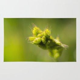 rye on green Rug