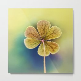 Heart-shaped Clover like Oxalis Macro. St Patrick's Day Metal Print