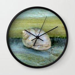 Ocean Snail Wall Clock