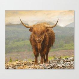 Highland Moo Canvas Print
