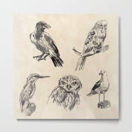 Bird vintage sketches 2 Metal Print