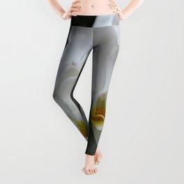 Immaculate Leggings