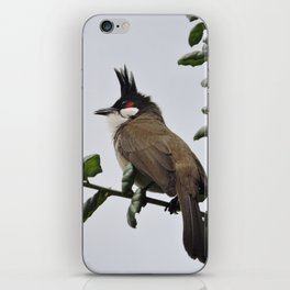 Red-Whiskered Bulbul iPhone Skin