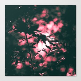 Looking for red Lights Canvas Print