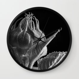 A Sunflower bud is about to open and a Crab Spider waits on the end of a leaf. Wall Clock