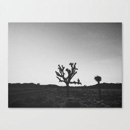 JOSHUA TREE IX / California Canvas Print