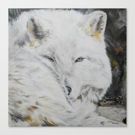 Eye of the Wild by Teresa Thompson Canvas Print