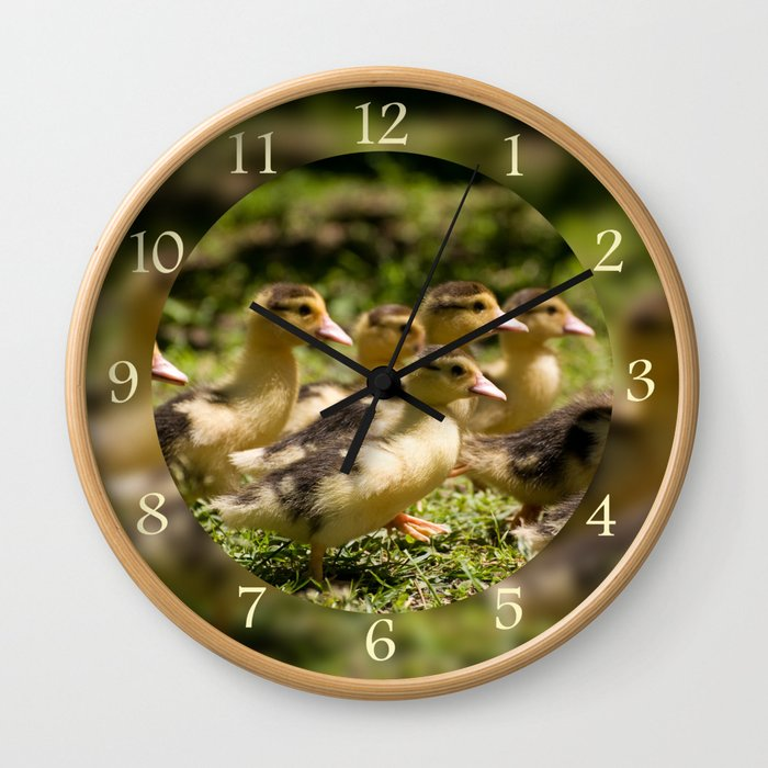 Yellow Muscovy duck ducklings running Wall Clock