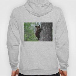 Bear Cub Climbing a Tree Hoody