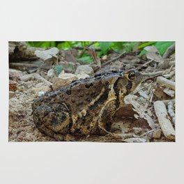 Big Toad On A Path In The Forest Rug
