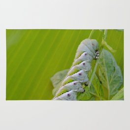 Tomato Horn Worm Rug