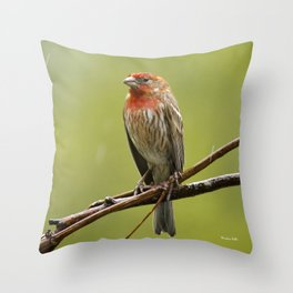 House Finch in the Rain Throw Pillow