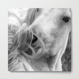 Horse Grooming Design Metal Print