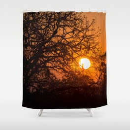 Sultry sun setting behind the sausage tree Shower Curtain