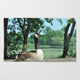 Deluxe Ducks #16 Rug