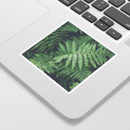 Fern Bush Nature Photography | Botanical | Plants Sticker