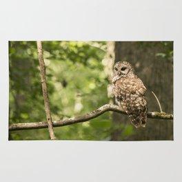 Barred Owl Rug