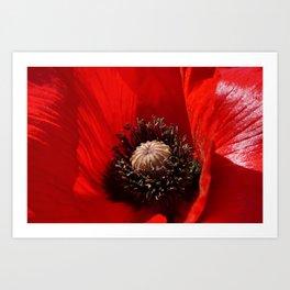 Sunlit Poppy Art Print
