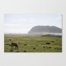 Monterey Cows Canvas Print
