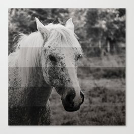 GreyScale Horse Canvas Print