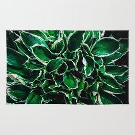 Hosta undulata albomarginata vibrant green plant leaves Rug