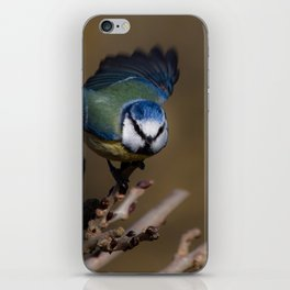 Blue tit about to fly off iPhone Skin