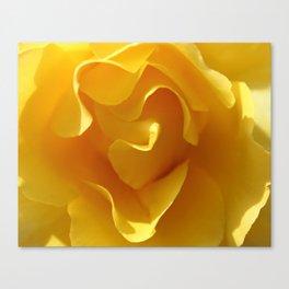Yellow Rose Ruffles Abstract Canvas Print