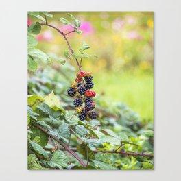 Blackberry. Canvas Print