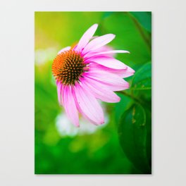 Looking For The Perfect Light Canvas Print