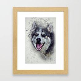 Beautiful husky Framed Art Print