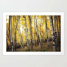 Aspen Trees of Colorado Art Print